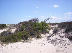 Back Bay Wildlife Refuge