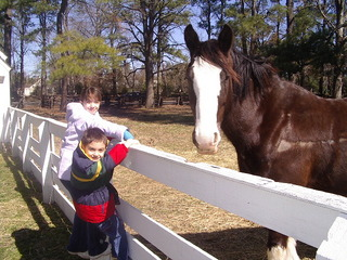 Petting the horses at Colonial Williamsburg Virginia during Homeschool Days.