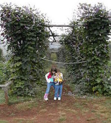 Don't miss the gardens at Monticello VA - they still grow things the way Jefferson grew them.