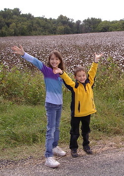 Cotton fields near Shirley Plantation.