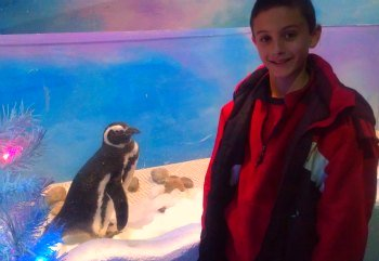 Busch Gardens Christmas Town Penguin Palace